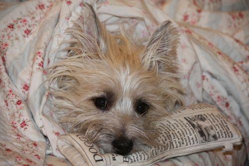 Renoir in Bed