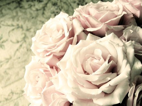 Pale Pink Roses 2 (2)