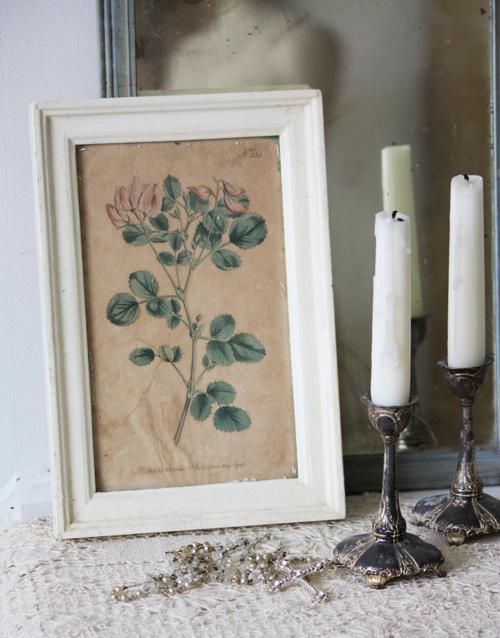Botanical Print 1