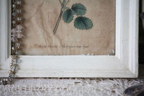 Botanical Print 3