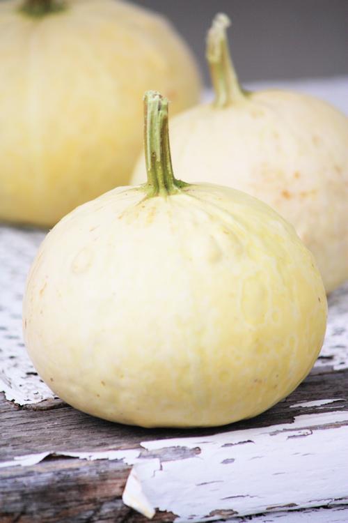 Autumn Gourds 2