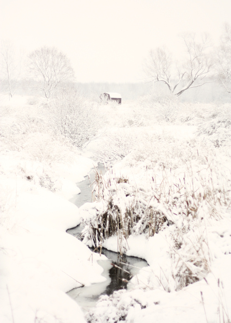 Country Stream in Winter