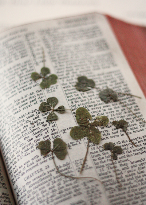 Four Leaf Clovers 2