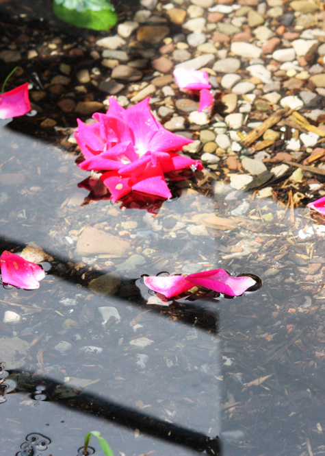 Puddle of Petals