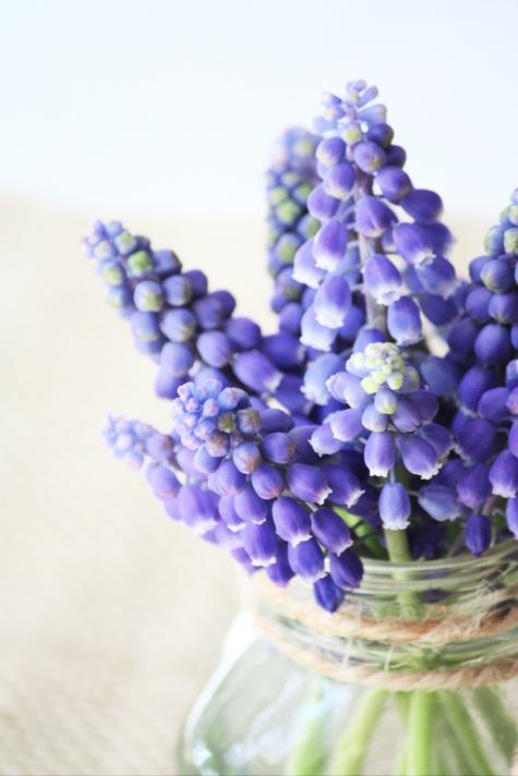 Muscari Bouquet 2