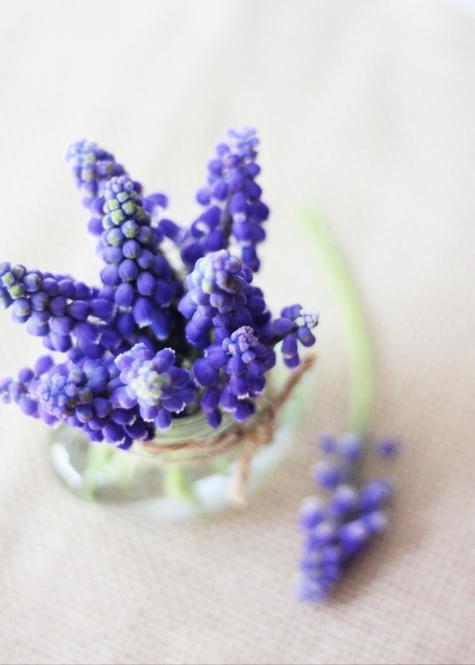 Muscari Bouquet 3