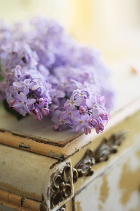 Lovely Lilacs 2